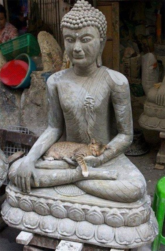 Cats Who Found Peace By Becoming Friends With Statues #greekstatue