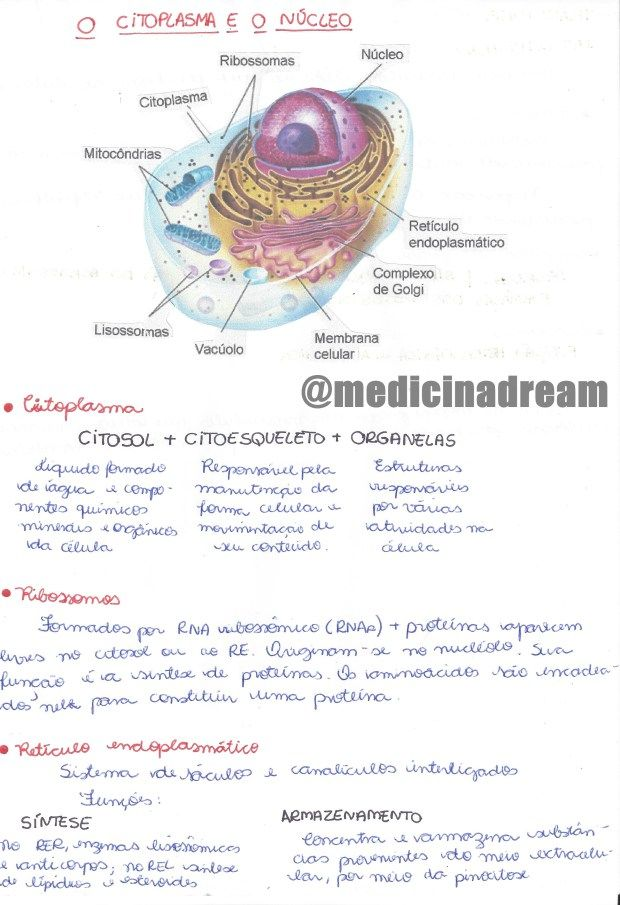 ♢ CORREÇÃO: No resumo de Eritroblastose fetal, o título está inc ...