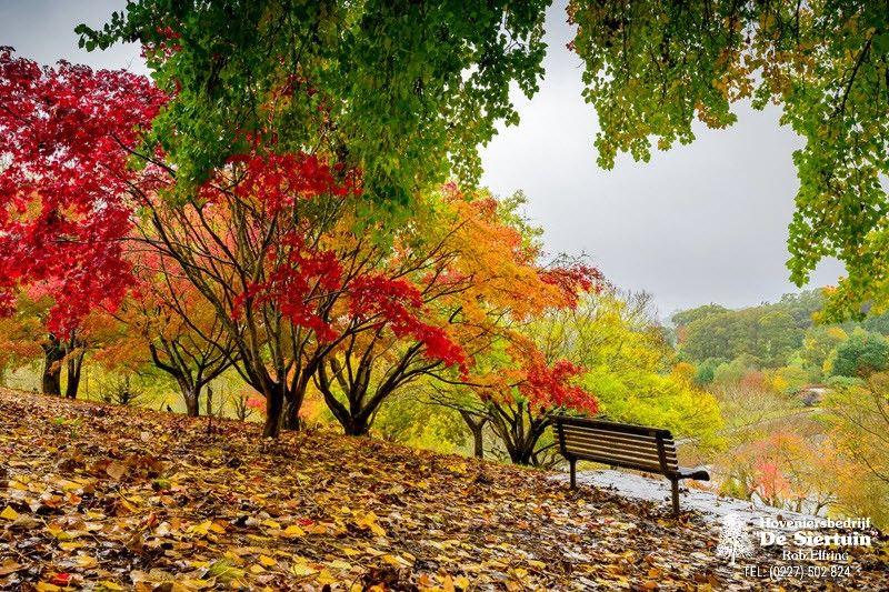 Hoeveel LIKES voor deze prachtige herfst ''tuin''?
