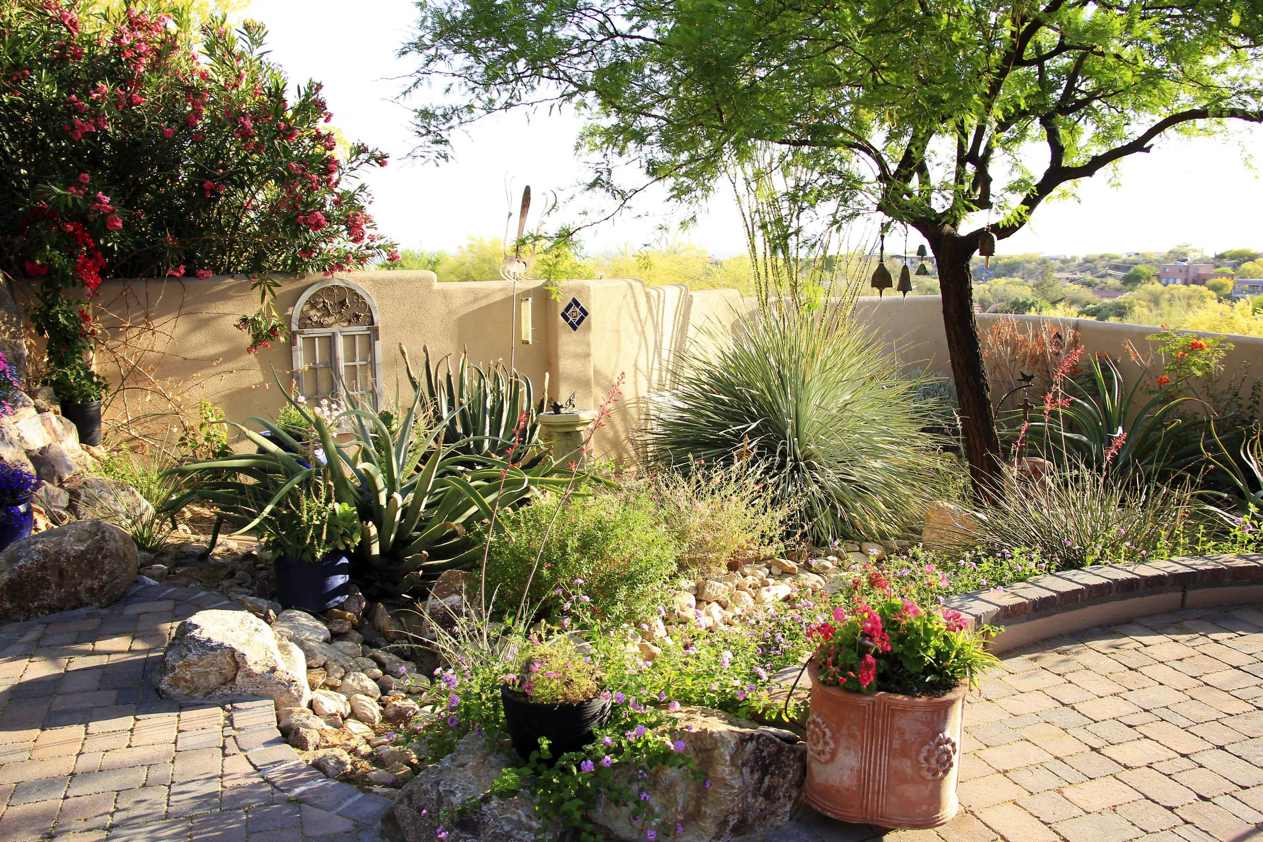 Stylish Drought Tolerant Landscaping Tucson Oasis