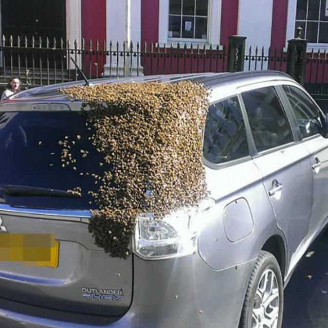 20 mil abejas persiguieron un auto donde había quedado atrapada su abeja reina. ¡Por más de 2 días!