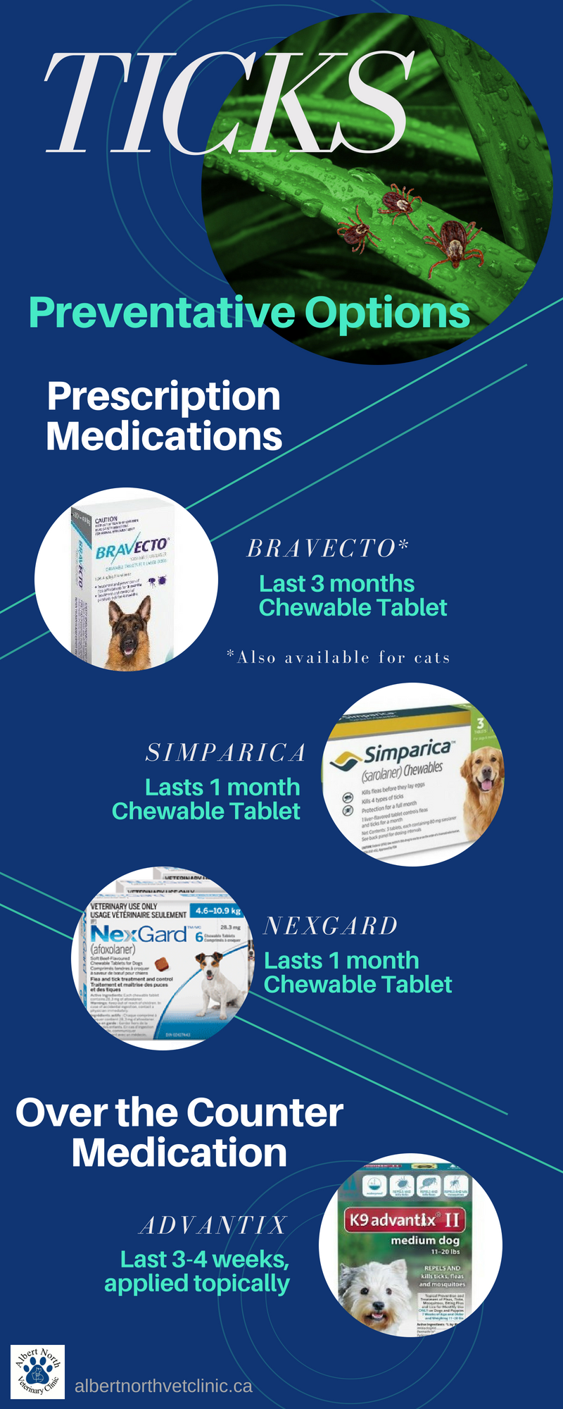 Know the options available to you to treat your dog