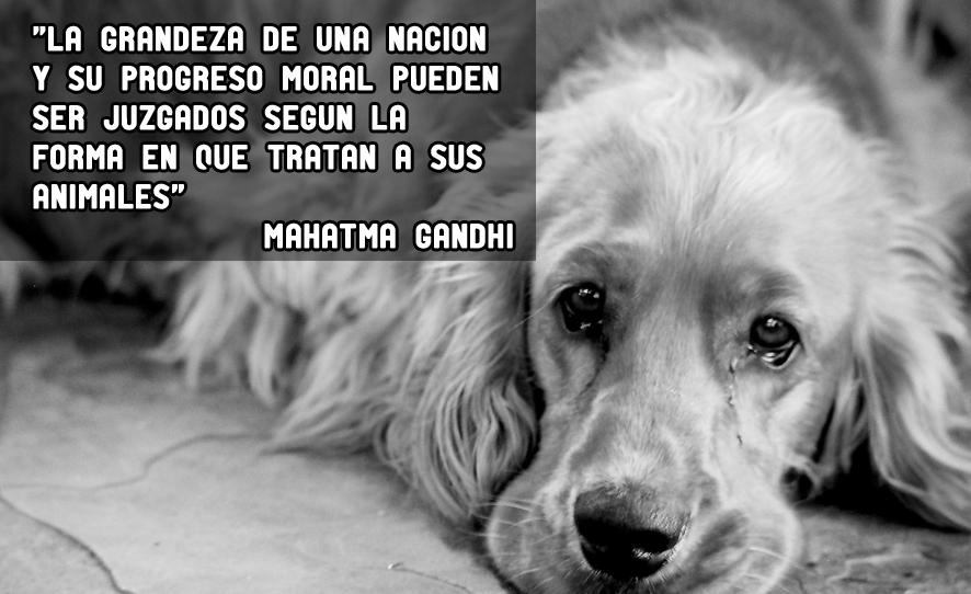 Resultado De Imagen De Frases De Gandhi Sobre Animales Dia