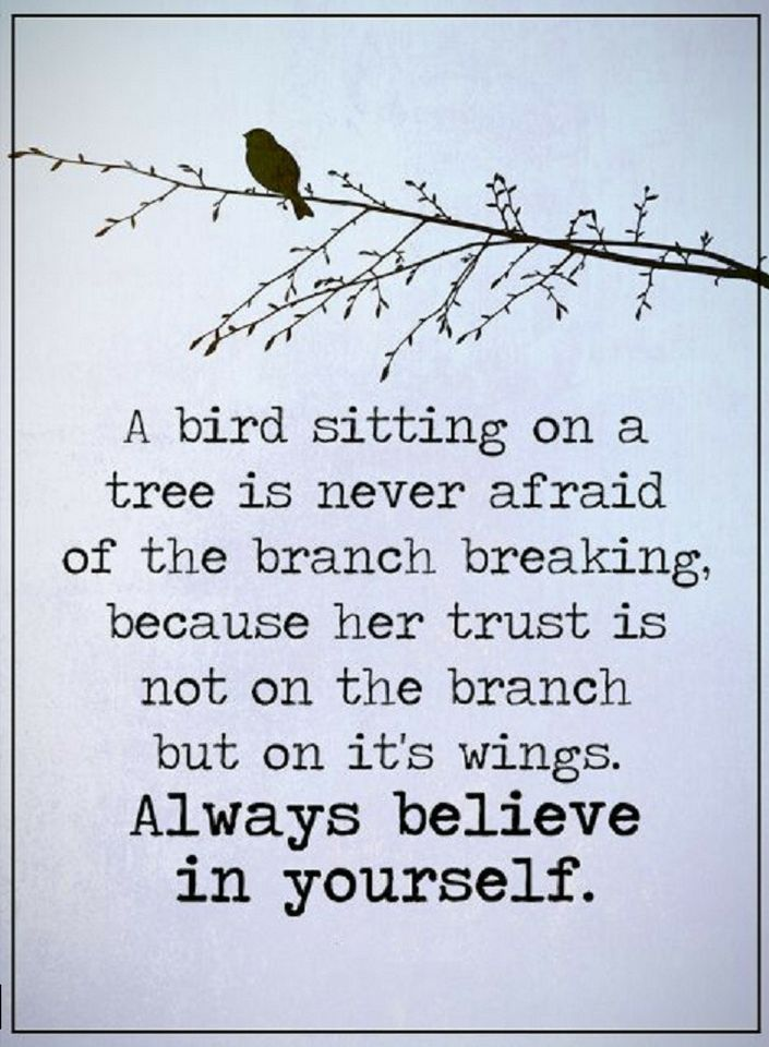 Quotes A bird sitting on a tree is never afraid of the branch breaking, because - Quotes