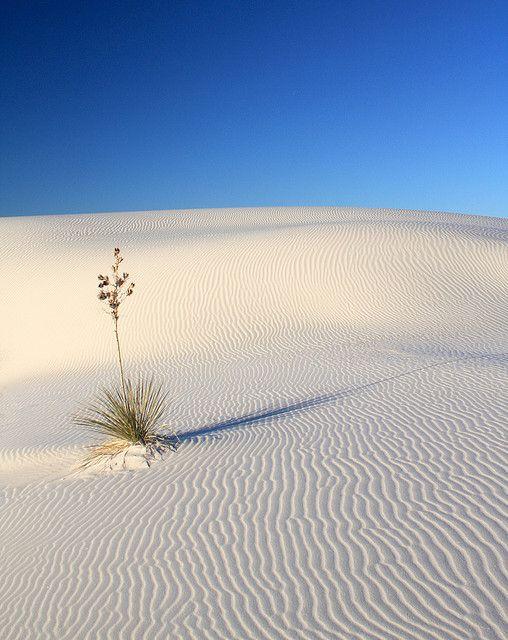 White Sands, NM