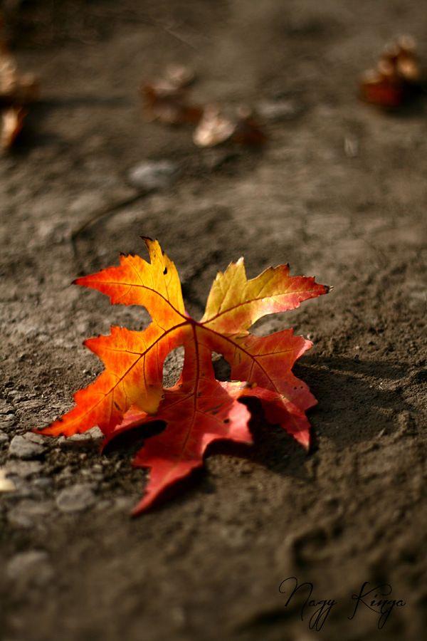 #leaf #fall #autumn