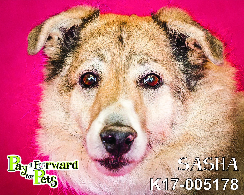Adopt Sasha On Dog Adoption Animals Friends Pet Adoption