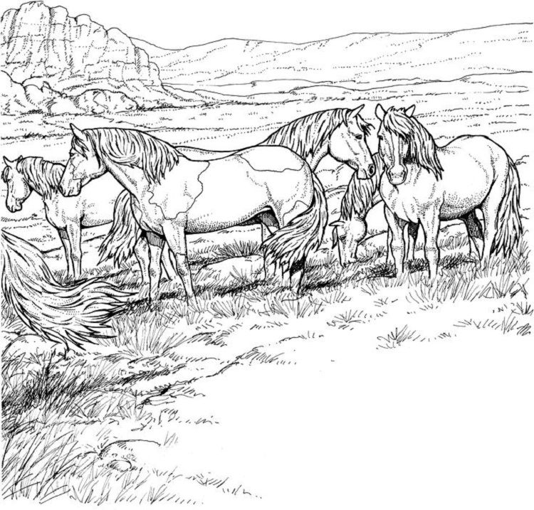 Wild Horse Herd Coloring Pages Coloring Pages For Kids Pinterest