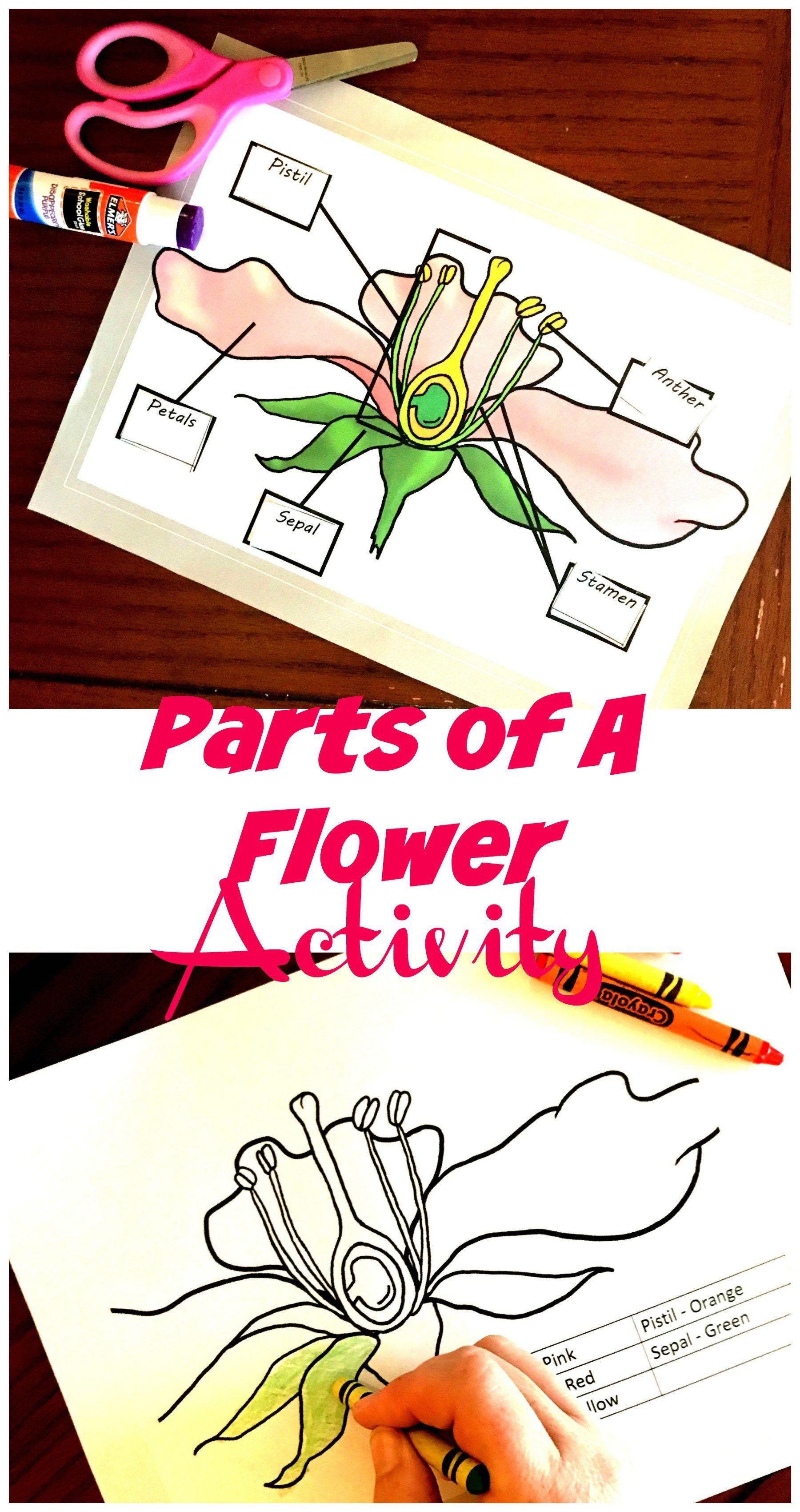 Pin On Botany For Kids