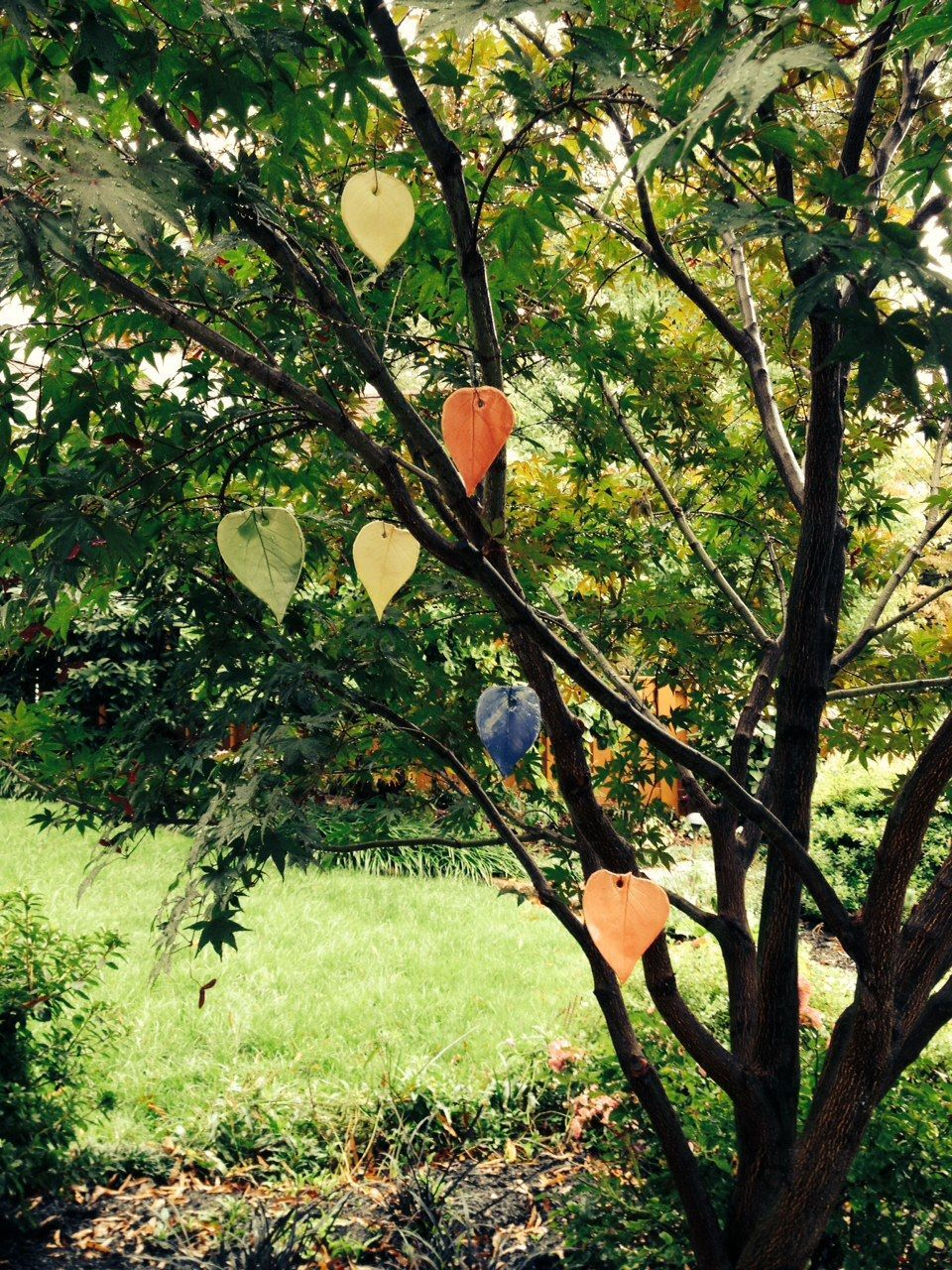 Slab Pottery leaves hanging from a red maple. Can't wait to see how it looks once the leaves fall.