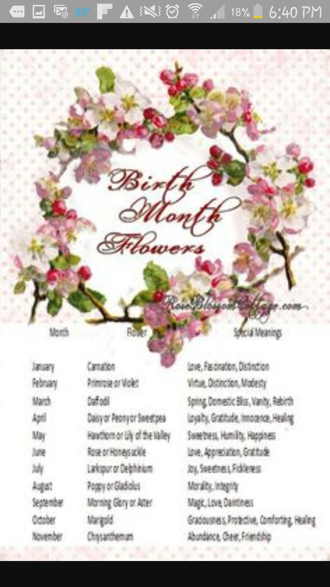Birth flowers image by Patti Welch on •MARCH madness