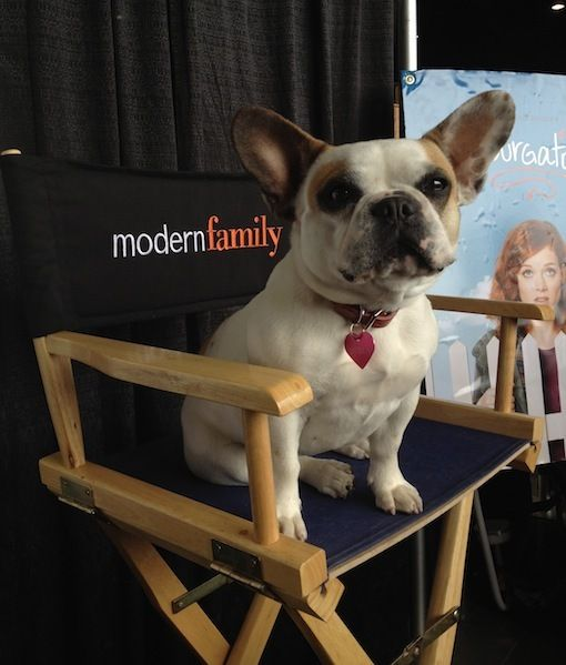 Modern Family\'s canine star, Stella! | frenchies | Pinterest ...