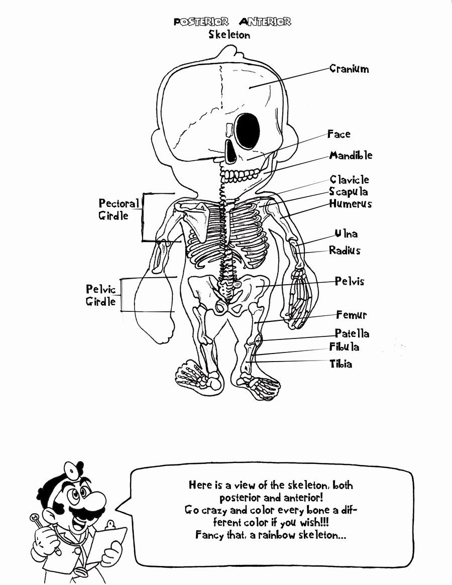 Best Anatomy Coloring Book Inspirational Free Anatomy And Physiology Coloring Pages In 2020 Anatomy Coloring Book Skull Coloring Pages Coloring Books
