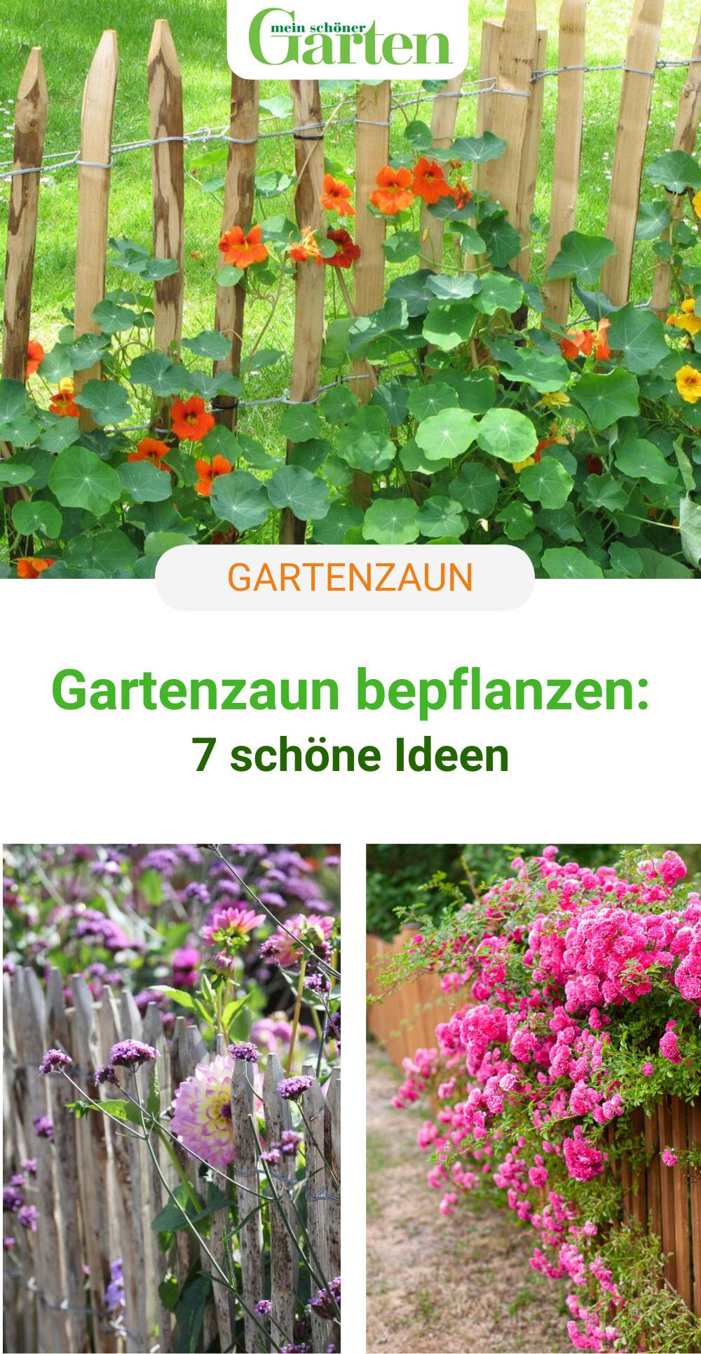 Gartenzaun bepflanzen: 7 schöne Ideen