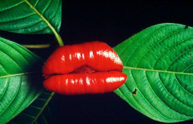 Растение проститутка проститутки г скопине