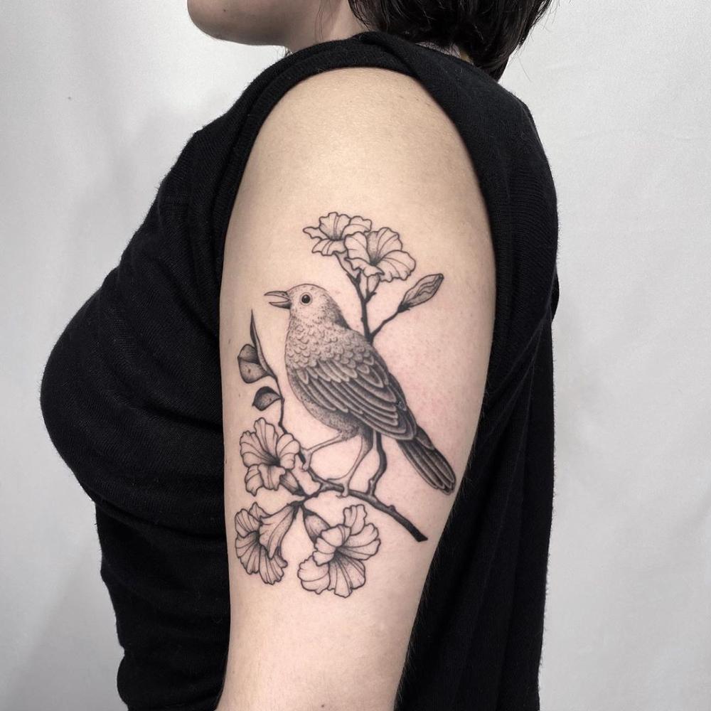 Pin On Bird Passaro
