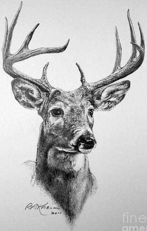 Pin de Stefani Joseph en Zeichnungen | Pinterest | Venado, Ciervo y ...