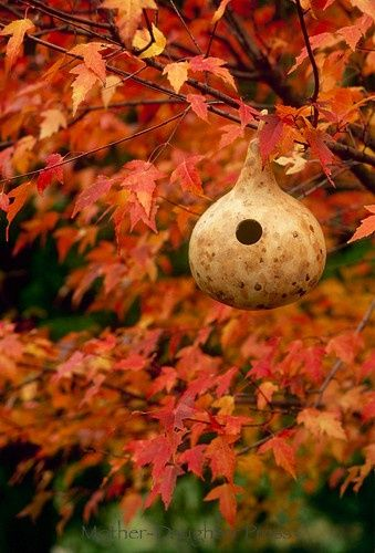 gourd bird feeder in fall leaves, The Enchanted Cove