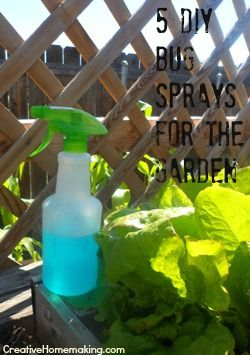 Five Environmentally Friendly Bug Sprays You Can Make Yourself To Treat Pests In Your Garden