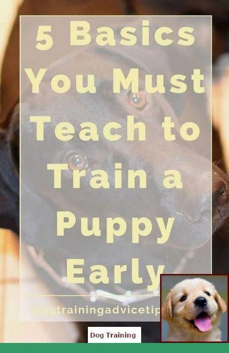 Become The Pack Leader Dog Training Puppy Training Dog