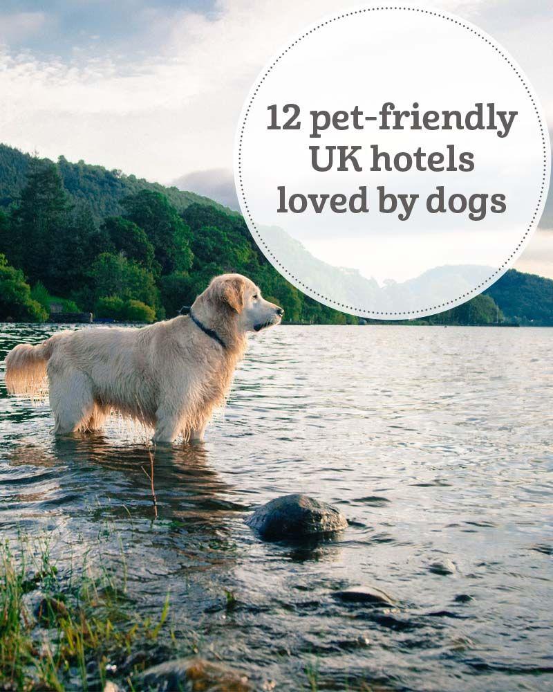 The 12 Best Dog Friendly Uk Hotels Loved By Dog Owners Dog Friendly Hotels Dog Friends Dog Friendly Hotels Uk