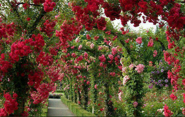 Lane of flowers botanical gardens near me buchart