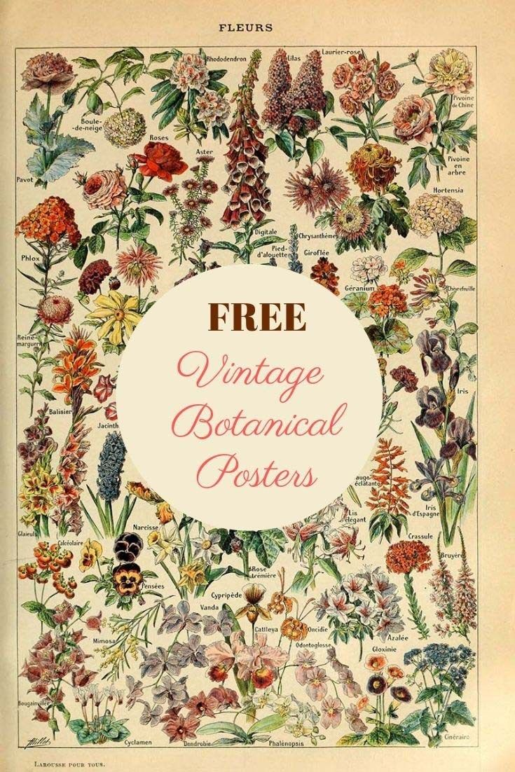 Amazing Free Collection Of Antique Botanical Posters