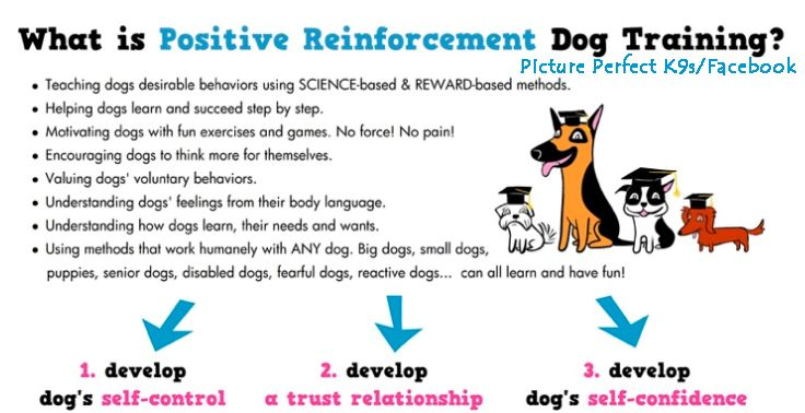 Dog Training Positive Reinforcement Dog Training