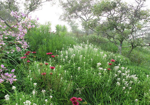 Massachusetts garden garten terrasse zimmerpflanzen und for Piet oudolf pflanzen