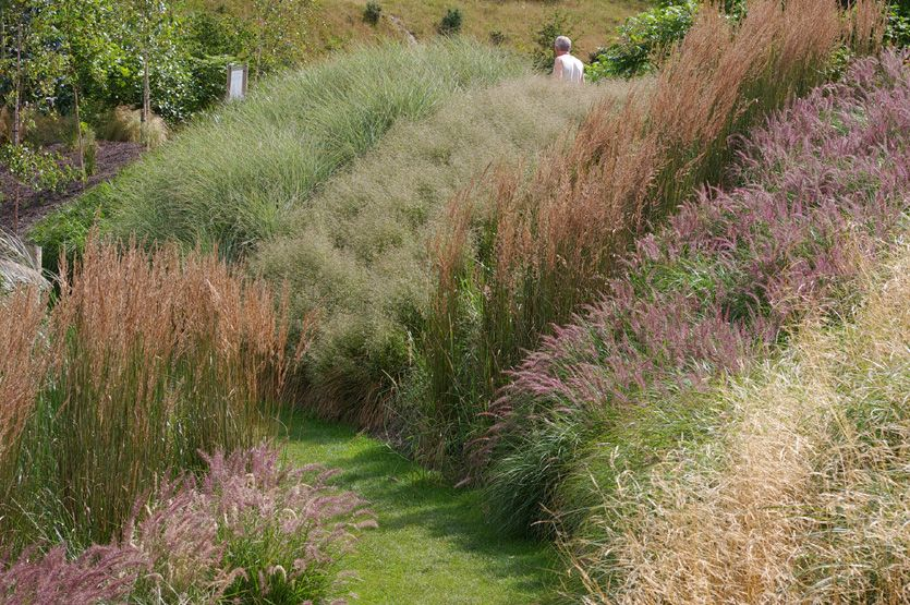 Eden Project grass planting  Grasses supplied by Knoll Gardens including Calamagrostis Karl Foerster and Pennisetum Karley Rose, looking fabulous in this excellent planting at the Eden Project in Cornwall during July.