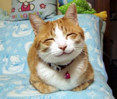 happy, smiling, kitty...you are too cute!