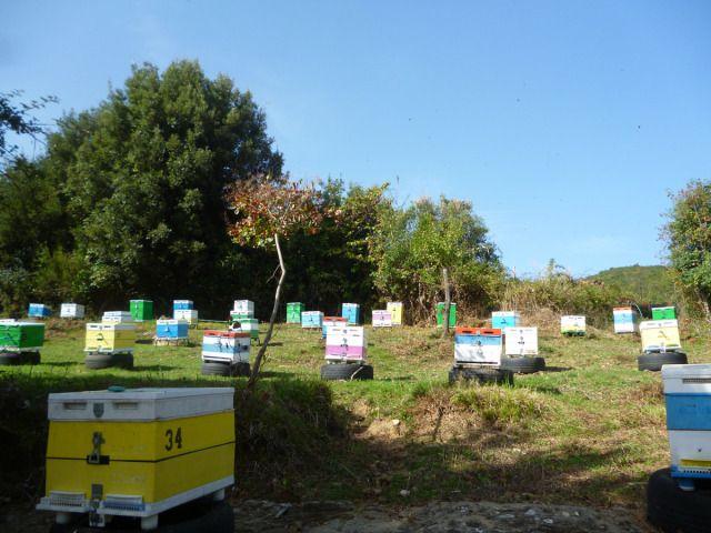Το μελισσοκομείο στην Πίνδο το φθινόπωρο για την ανθοφορία της ερείκης.
