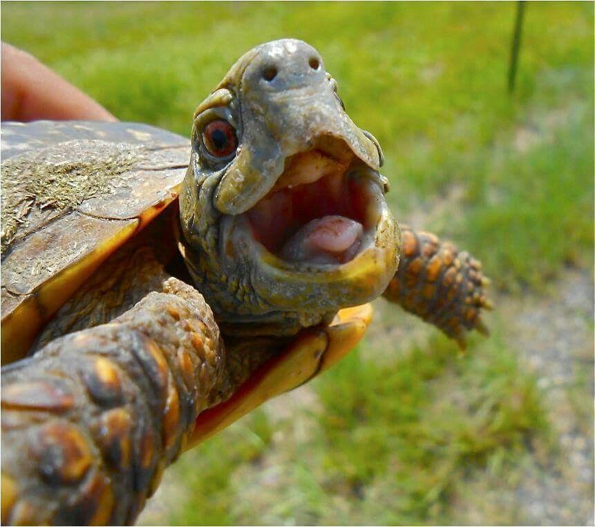 Lustige Schildkröten