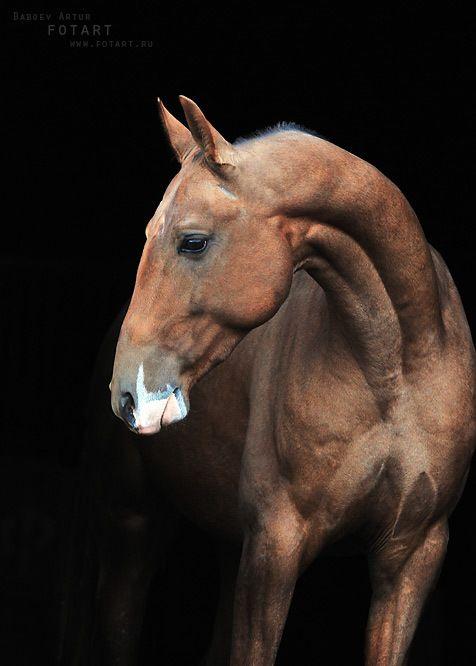 Pin von Brooke Ventzos auf Future Horses | Pinterest | Pferde