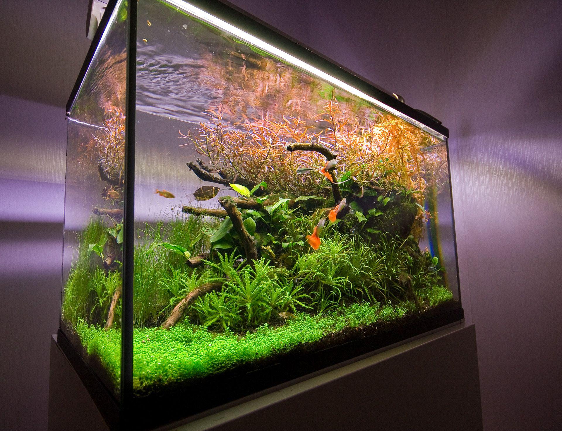 Dragon Stone aquarium Aquarium Pinterest