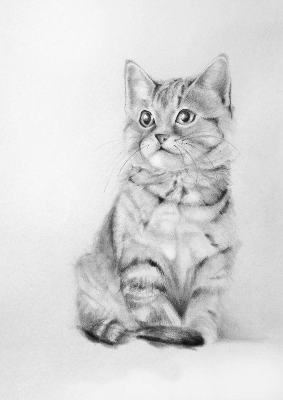 Custom Portrait of Your Cat 7x5 Pencil Drawing from your