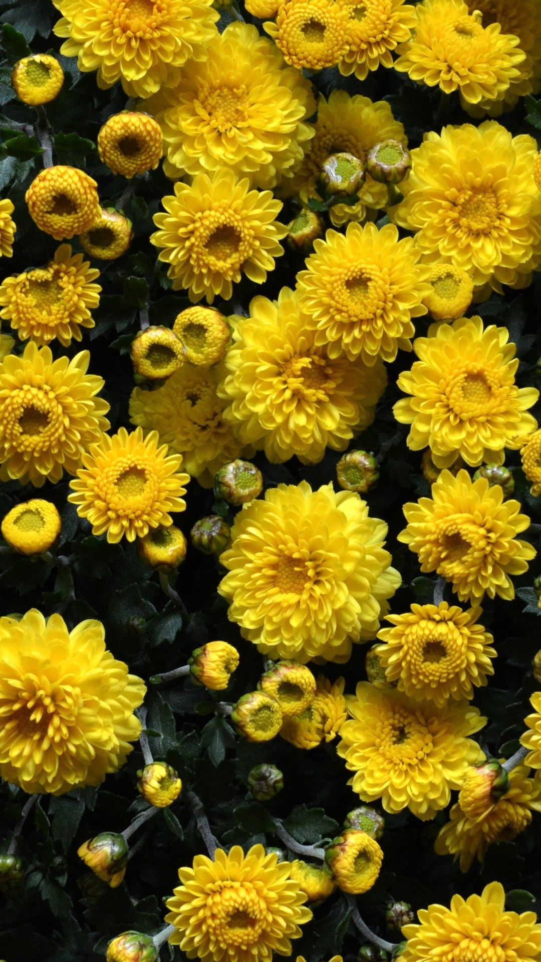 Yellow Flowers Iphone Wallpapers For Iphone Is 4K