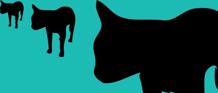 cat vector shape