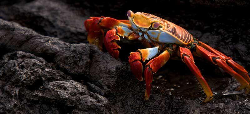 Photo tour: Wildlife of the Galapagos