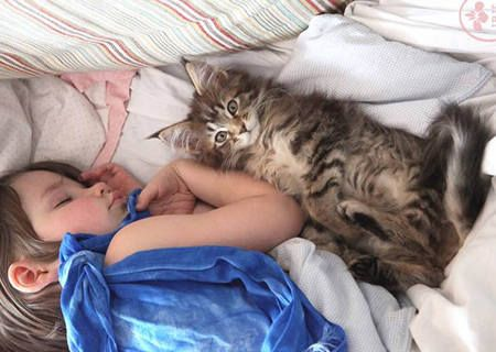 Thula The Kitten Becomes Guardian Angel To An Autistic Child Learn about autism. Lets get rid of stigma associated with it