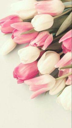 Tulipán Fondo Fondos De Pantalla Tulipanes Mejores Flores Flores De Primavera