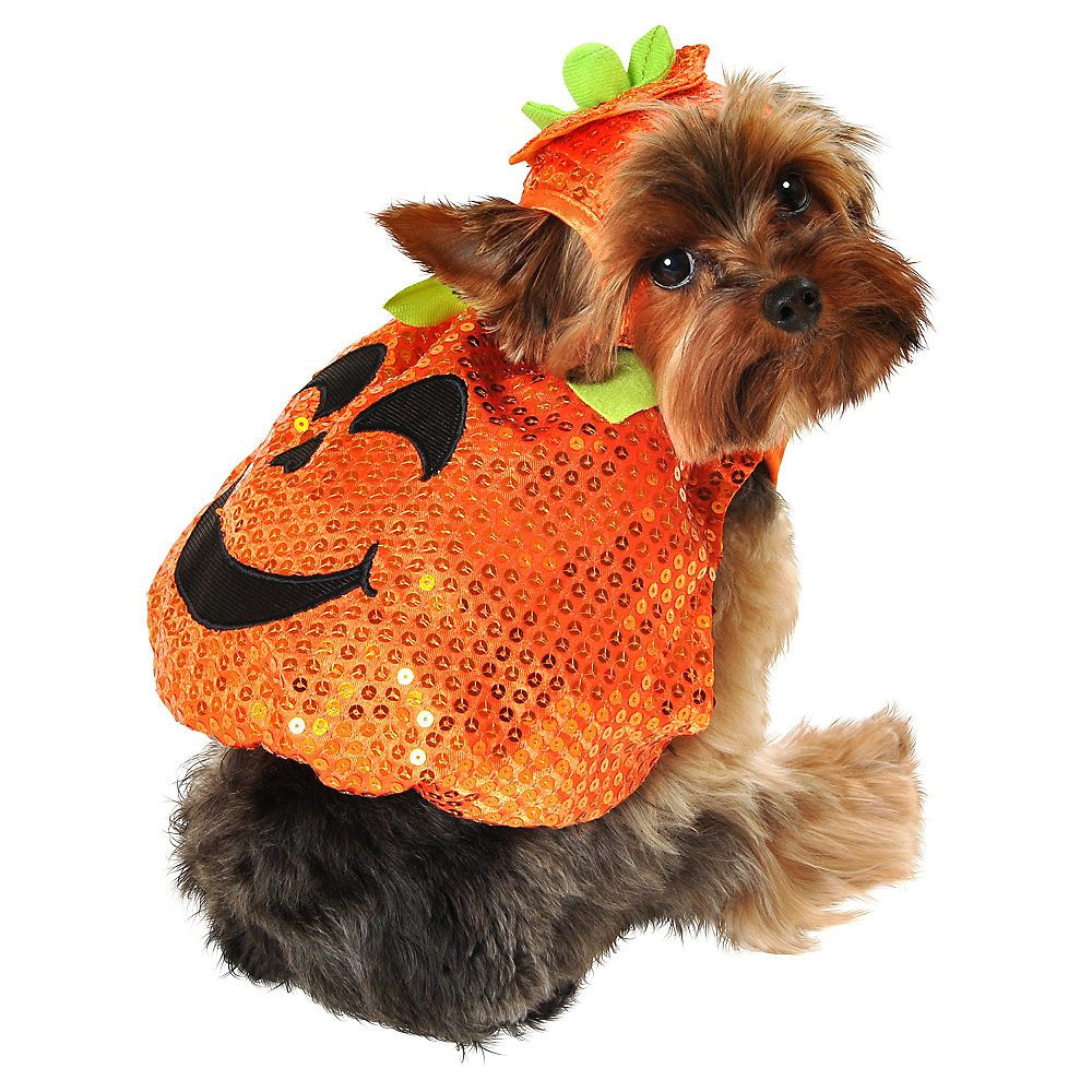 Sequin Pumpkin Dog Costume Pet halloween costumes, Dog
