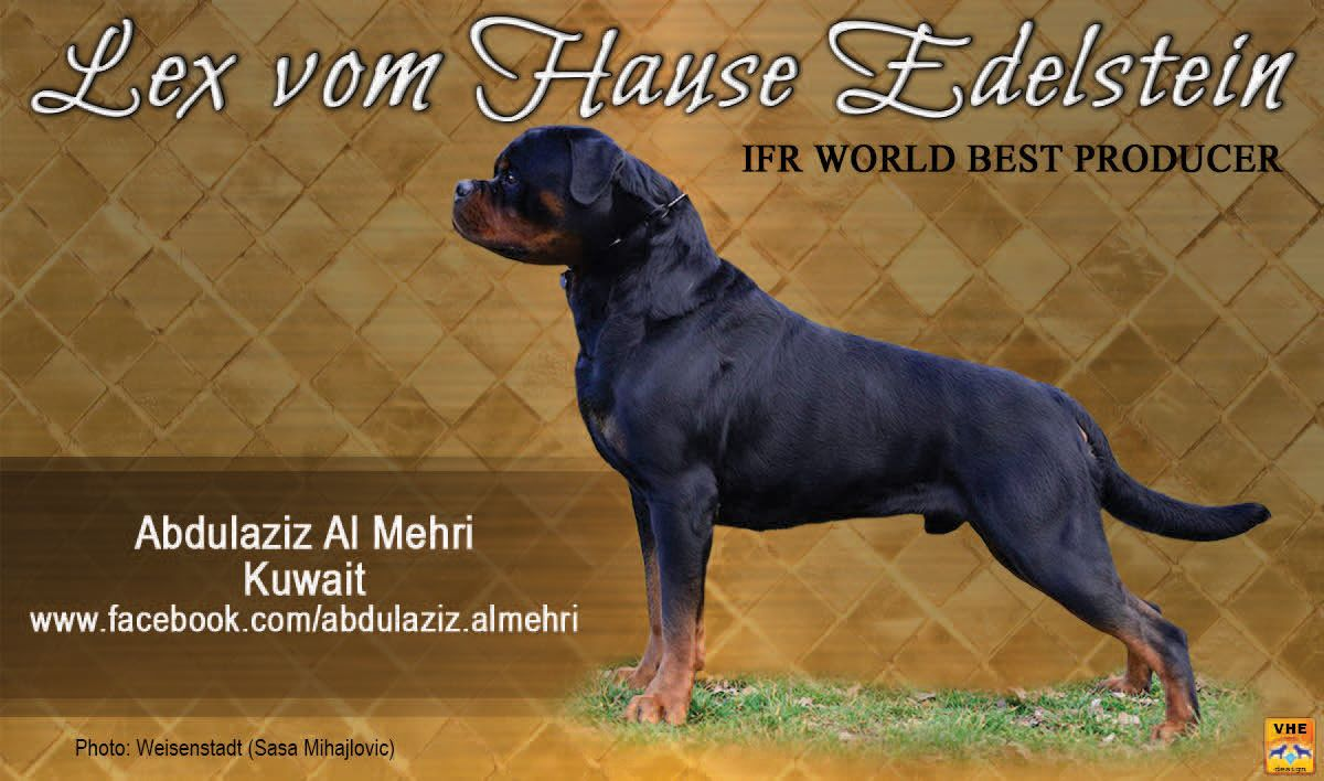 Lex Vom Hause Edelstein Ifr World Best Producer Owned By Abdulaziz