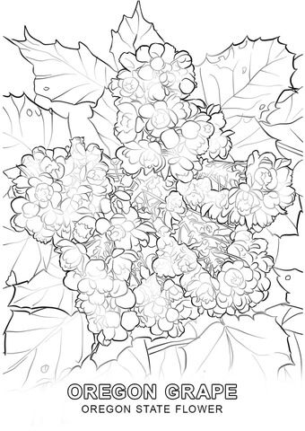 Oregon State Flower Coloring Page Free Printable Coloring Pages