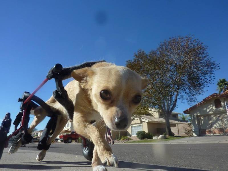 Small puppy rescue az