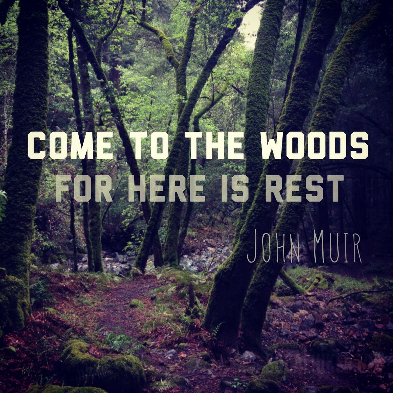 Muir Monday: Come to the Woods, for Here is Rest - SoCal Hiker