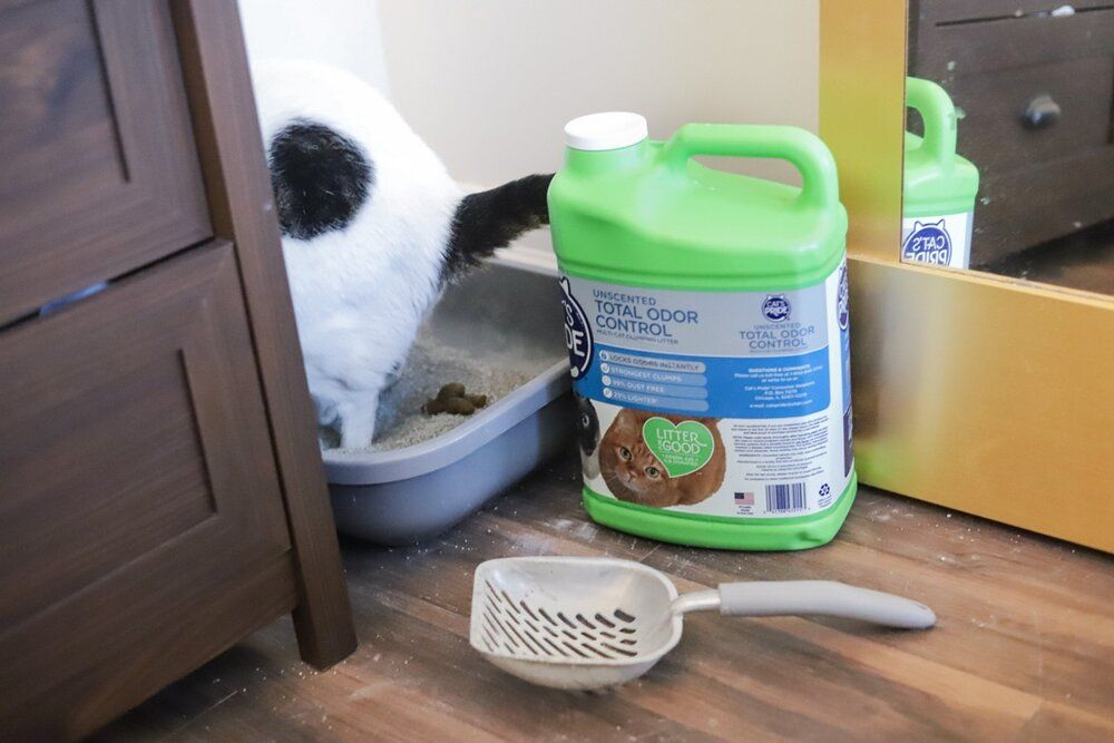 Your Cat S Thoughts On Their Litter Box 4 Tips For A Better Litter Box Best Litter To Buy Litter For Good Green Jug Cat In 2020 Litter Box Litter Best Litter Box