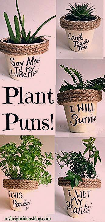 Puns on Painted Potted Flower Pots  Adorable Gift Idea to Make Them Smile Easy gift Idea A terracotta planter painted with a funny message makes a wonderful easy present...