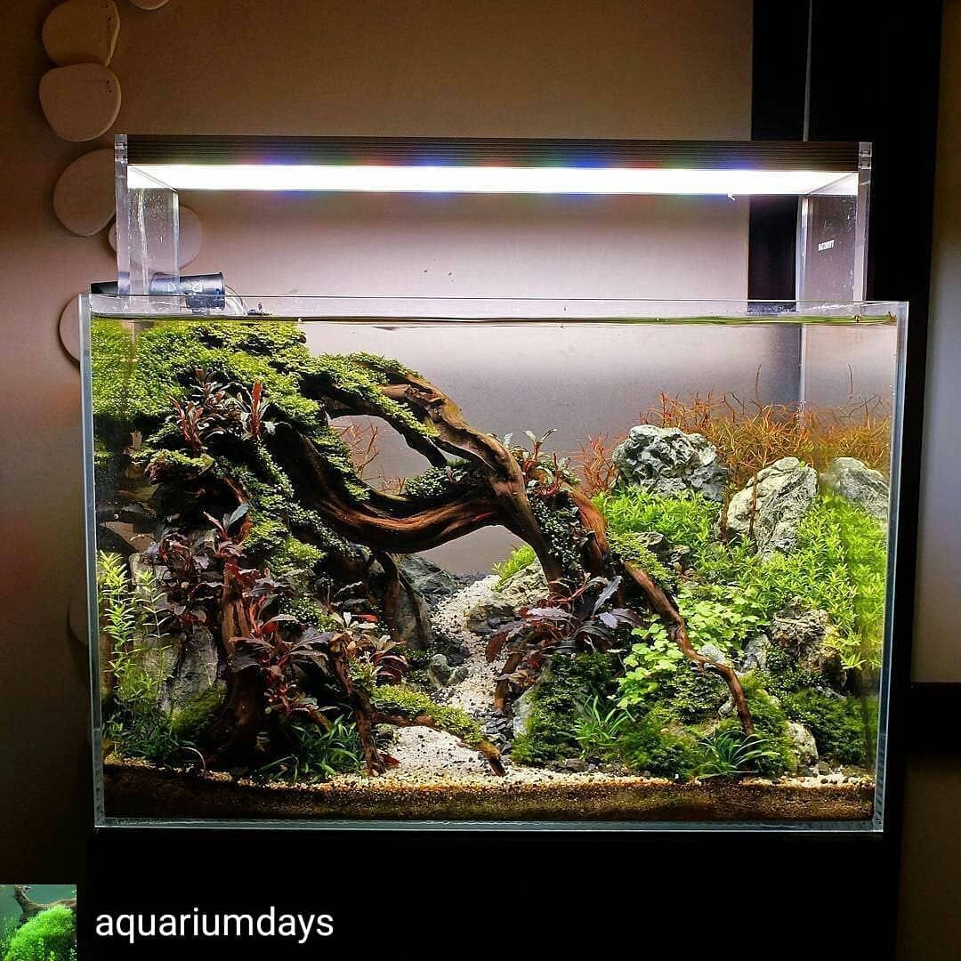Regrann from aquariumdays very beautiful aquascape by xiaozhuang