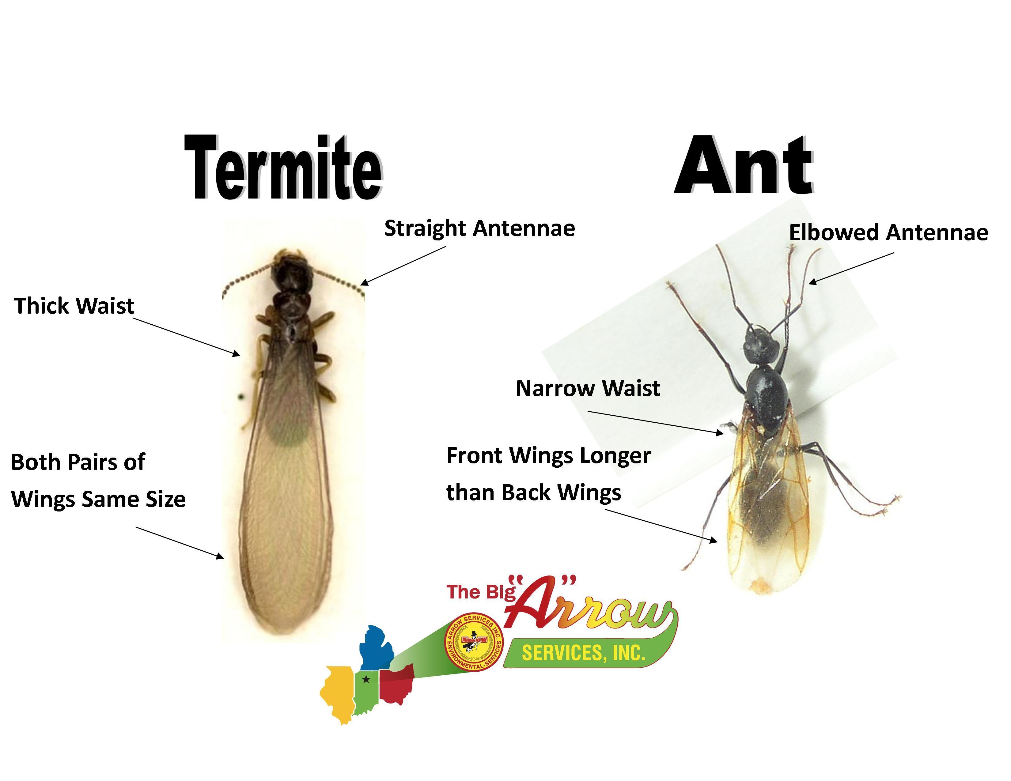 Termites   Pinterest
